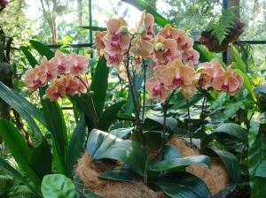 Nacionālais orhideju dārzs